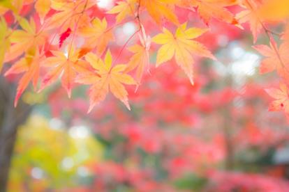 秋のイメージ | 観たい!行きたい!味わいたい!この秋おすすめのイベントスポット | 高級交際クラブTen Carat「10カラットブログ」