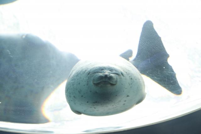 大阪 海遊館の笑うワモンアザラシ | 今年もラストスパート! | 高級交際クラブTen Carat「10カラットブログ」