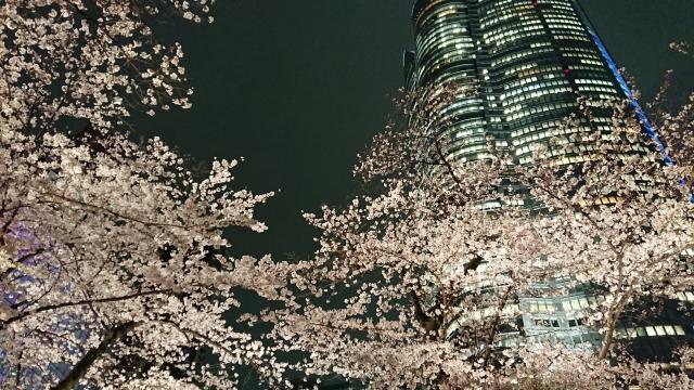 六本木の夜桜 | オススメの春のデートスポット | 高級交際クラブTen Carat「10カラットブログ」