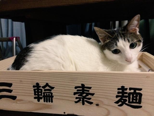猫そうめん | 夏の定番食 | 高級交際クラブTen Carat「10カラットブログ」