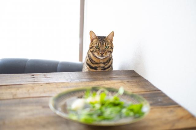 七草(七草の節句)と猫 | 季節の変わり目の行事といえば? | 高級交際クラブTen Carat「10カラットブログ」