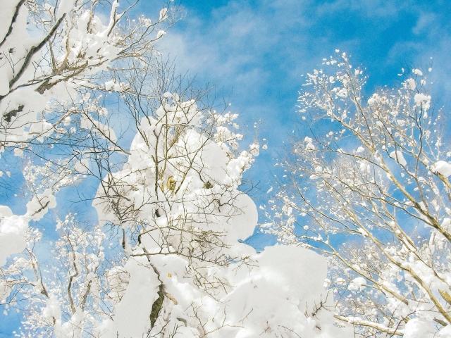 樹氷 | 今季オススメなスノースポーツデート | 高級交際クラブTen Carat「10カラットコラム」