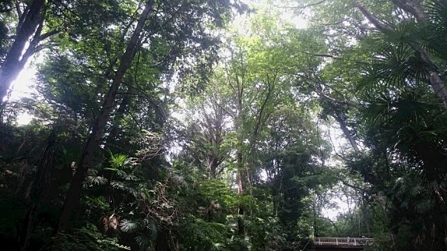 豊かな木々と日の光(等々力渓谷) | 日々の疲れを取ろう!関東にあるマイナスイオンスポット | 高級交際クラブTen Carat「10カラットコラム」